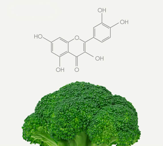 Broccoli Polyphenol