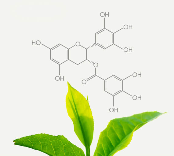 Green Tea Polyphenol