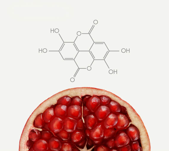 Pomegranate Polyphenol